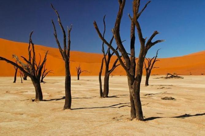 ナミブ砂漠の画像 p1_32