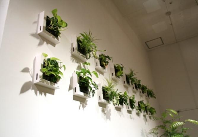 無印良品の観葉植物サボテン・多肉植物
