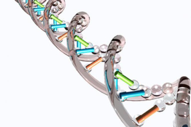 遺伝子 突然変異 に対する画像結果